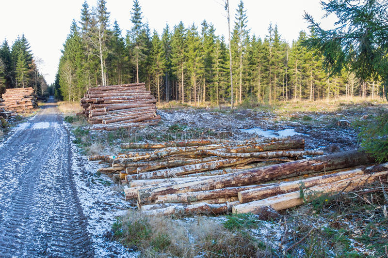 Pile of timber. Of the woods at a clearcut area stock photo