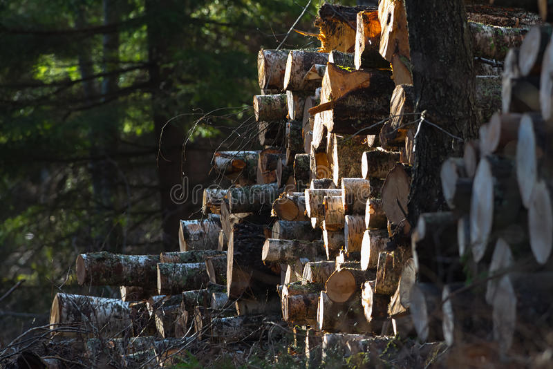 Pile of timber in the woods. At a clearcut during spring royalty free stock images