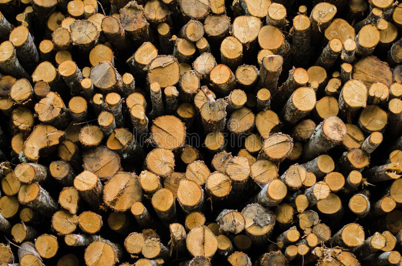 Download Pile of trees stock image. Image of pieces, dead, down - 25086269