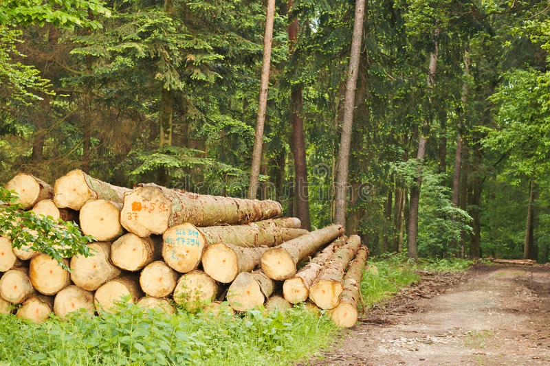 Pile of trunks in the forrest next to a walkway stock images