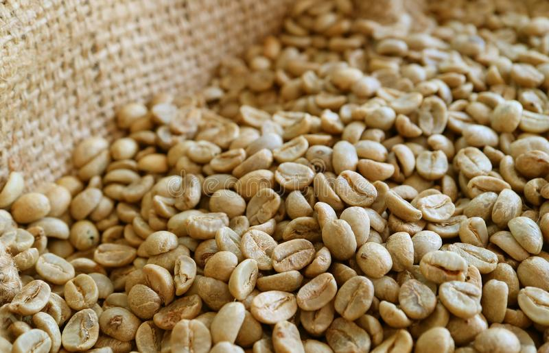 Unroasted Coffee Beans >> Pile Of Unroasted Coffee Beans In The Burlap Bag Stock Photo