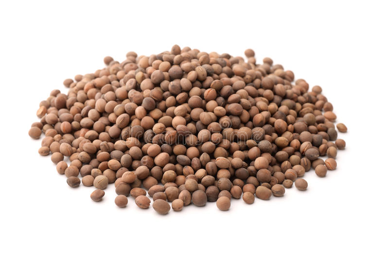 Pile of vetch seeds stock image