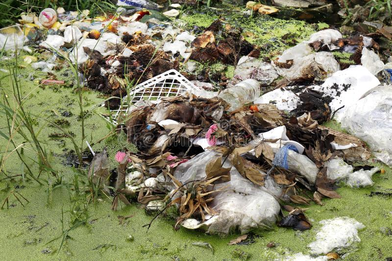 Pile of Waste plastic bags and dried leaves, Plastic bags in the lake waste water rotten, Garbage moss in sewage dirty water river stock photo