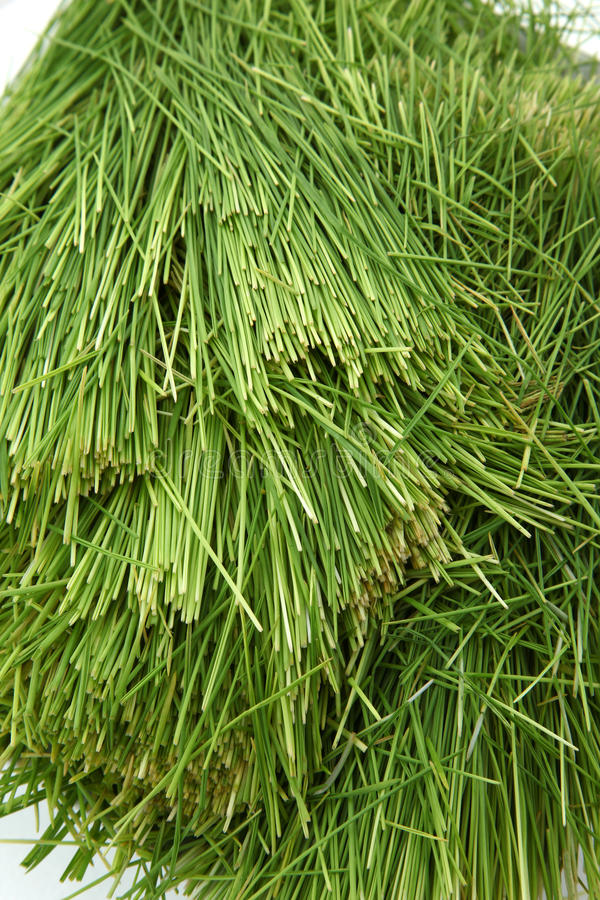 Pile of Wheatgrass. Pile of clean wheatgrass over white stock image