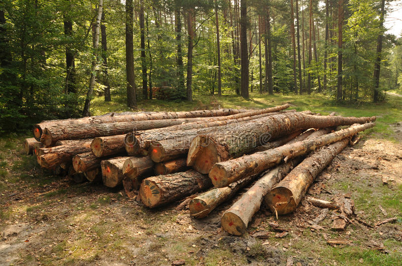 Pile of wood in forest stock images