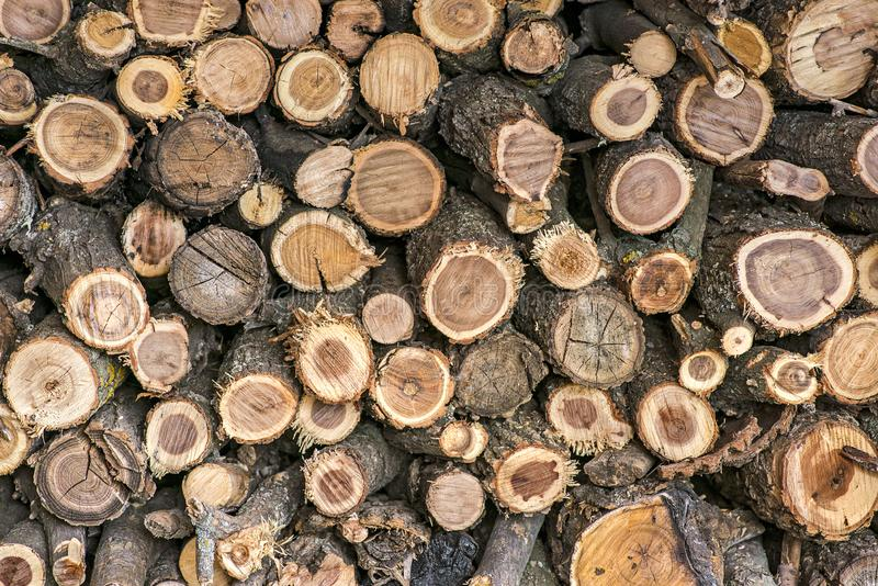 Pile of wood logs. Wood logs texture background. Pile of wood logs ready for winter. Pile of wood logs storage for industry.  royalty free stock photo