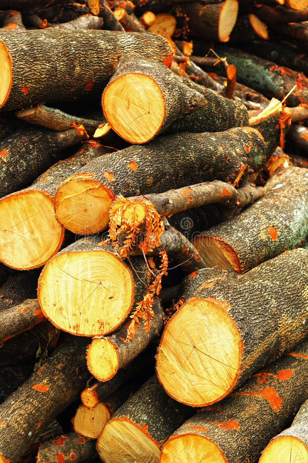 Download A pile of wood. stock image. Image of firewood, brown - 33355145