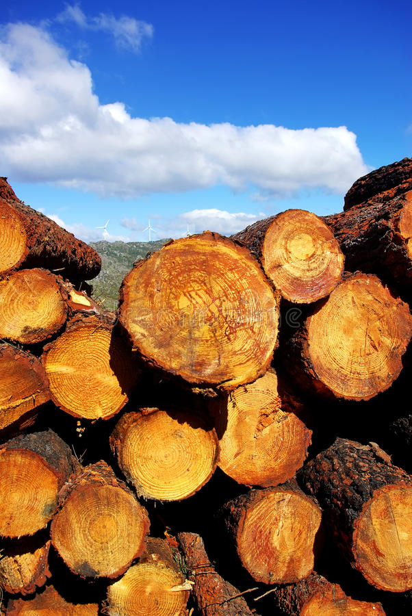 Download Wood trunks of pine trees stock image. Image of forestry - 29789723