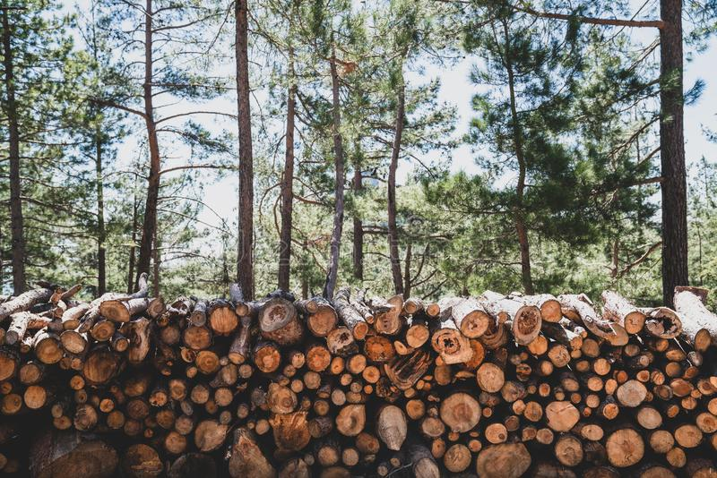 A pile of wooden logs prepares for the wood industry. A pile of wooden logs prepares for the wood industry royalty free stock image