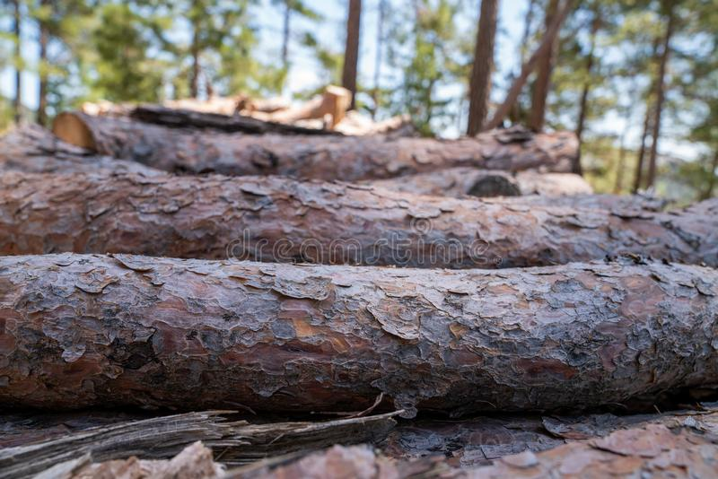 A pile of wooden logs prepares for the wood industry. A pile of wooden logs prepares for the wood industry royalty free stock images