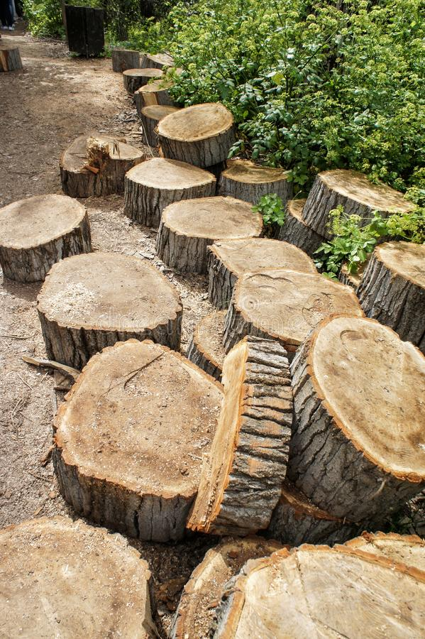 A pile of wooden tree stumps. The trunk of a tree is sawn to pieces, stumps of felled trees, pile of wooden tree stumps, sawn tree trunk, chunks of wood, Banias royalty free stock images