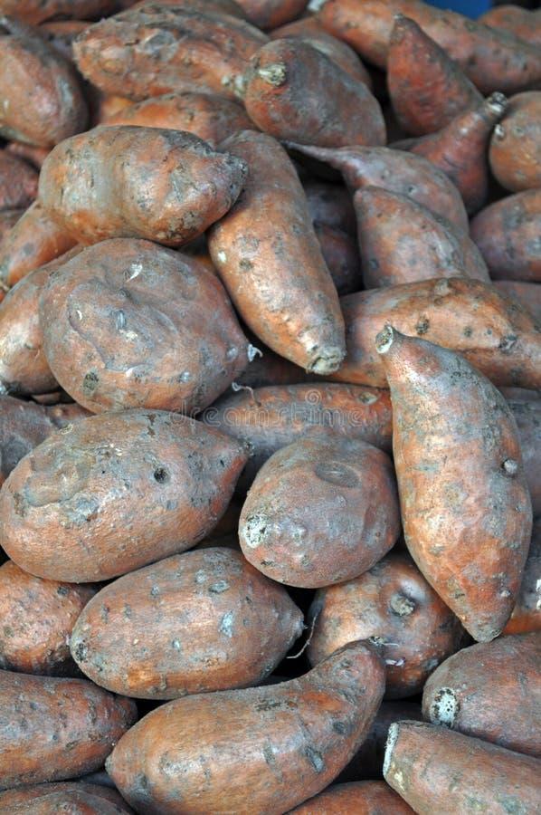 Pile of Yams / Sweet Potatoes
