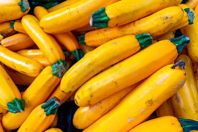 A Pile of Yellow Zucchini royalty free stock photo