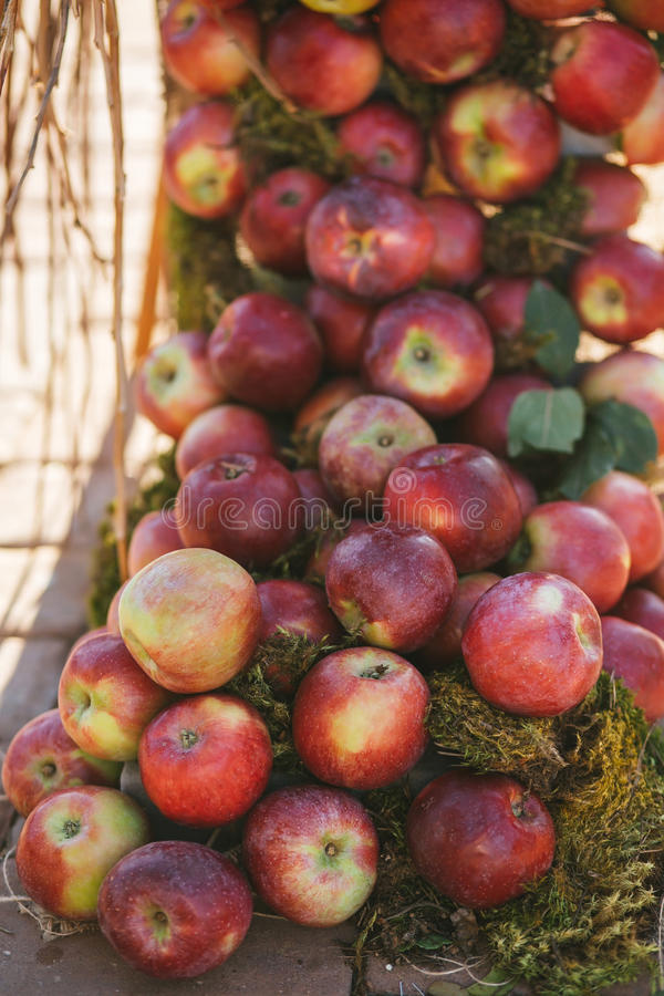 A pile of yummy ripe sweet juicy red apples royalty free stock image