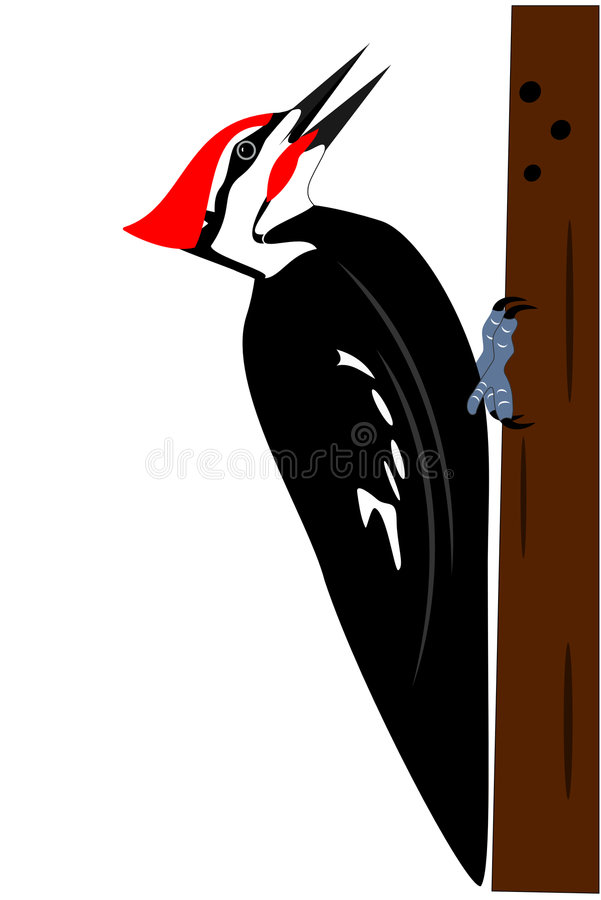 Pileated woodpecker royalty free illustration