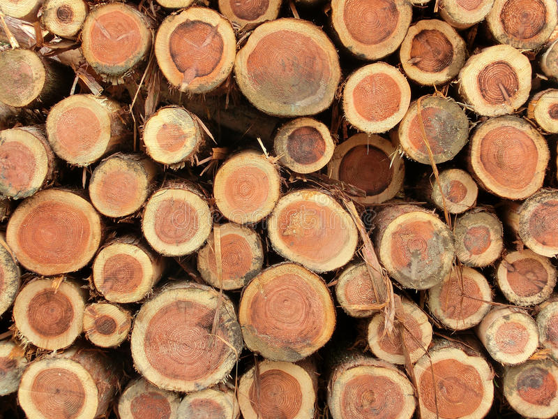 Download Piled logs stock image. Image of industry, tree, logging - 25869467