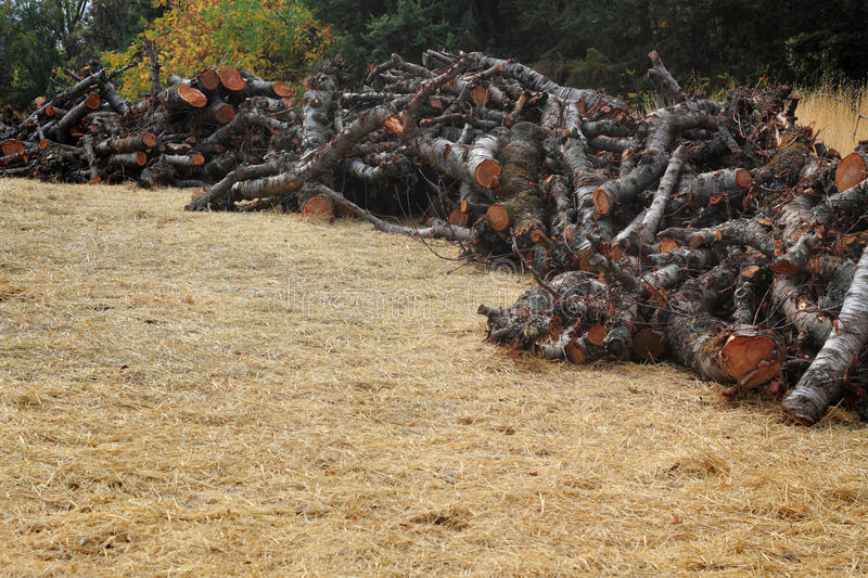 Piled Orchard Firewood stock photos