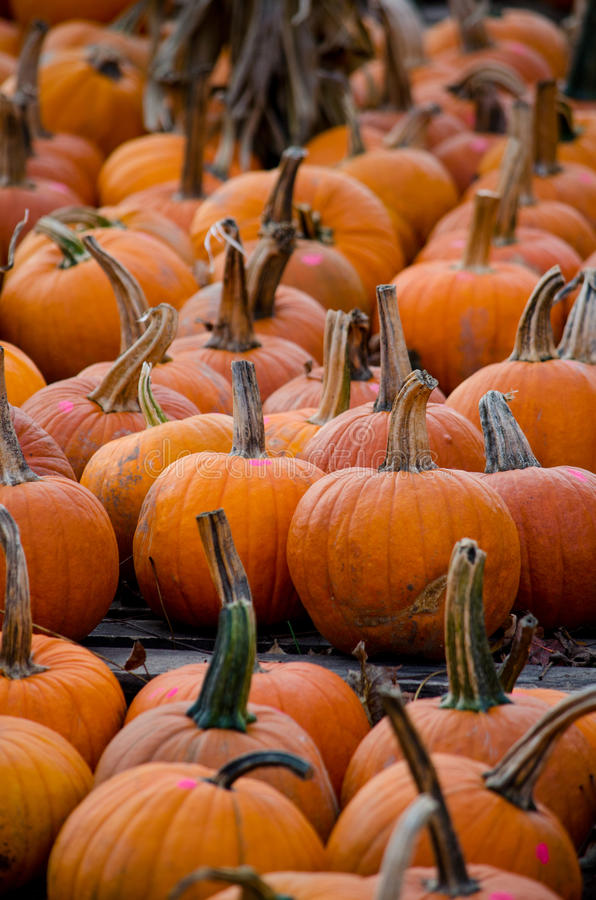 Piles of fall pumpkins stock photos