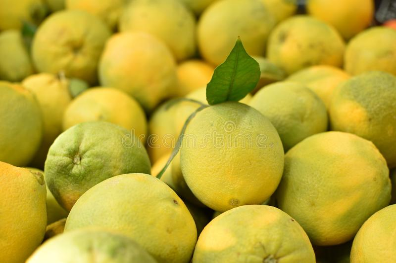 Piles of citrus in the market royalty free stock images