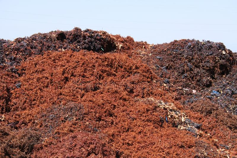 Piles of crushed grapes royalty free stock photography
