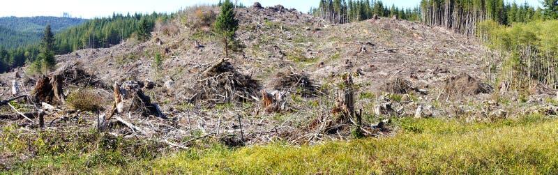 Piles de barre oblique et forêt définie de sapin de Douglas photos libres de droits