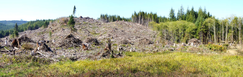 Piles de barre oblique et forêt définie de sapin de Douglas photographie stock