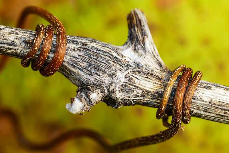 Piles de paille après récolte en automne images libres de droits