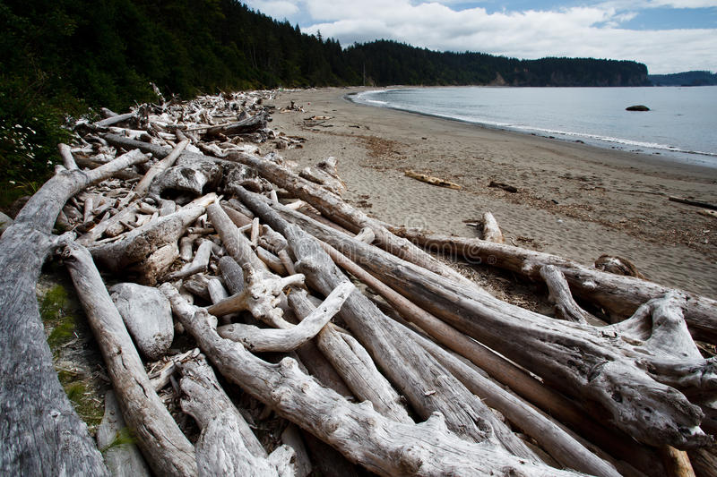Download Piles Of Dead Driftwood Trees Litter The Beach Royalty Free Stock Image - Image: 21899596
