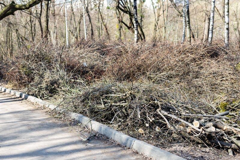 Piles des branches d'arbre coupées en parc de ville Déboisement sanitaire Tas de broussaille et de bois mort secs images stock