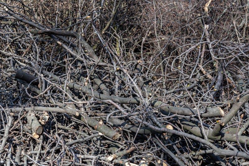 Piles des branches d'arbre coupées en parc de ville Déboisement sanitaire Tas de broussaille et de bois mort secs images libres de droits