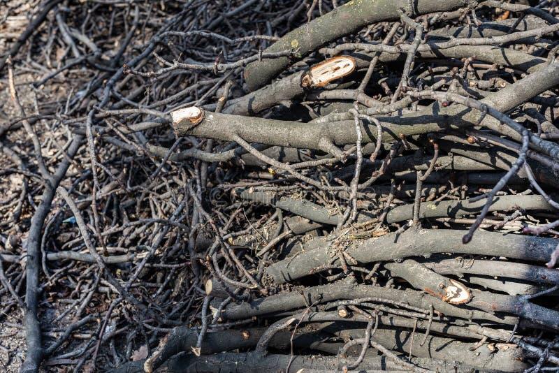 Piles des branches d'arbre coupées en parc de ville Déboisement sanitaire Tas de broussaille et de bois mort secs photos libres de droits