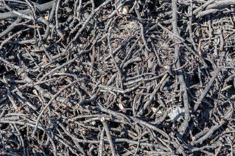 Piles des branches d'arbre coup?es en parc de ville D?boisement sanitaire Tas de broussaille et de bois mort secs image stock