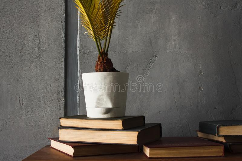 Piles of old books and a flower in a pot royalty free stock photos