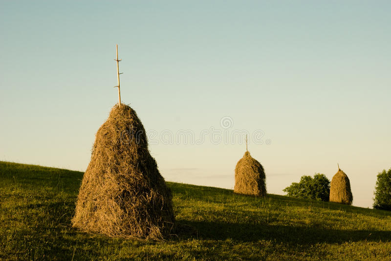 Download Piles of hay stock image. Image of cereal, fall, haystack - 24427545