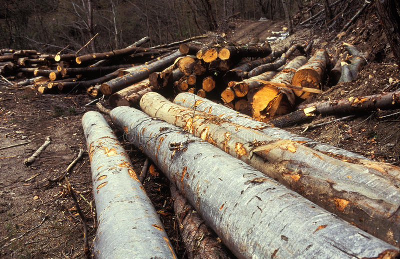 Download Piles of logs in forest stock photo. Image of down, global - 21009094