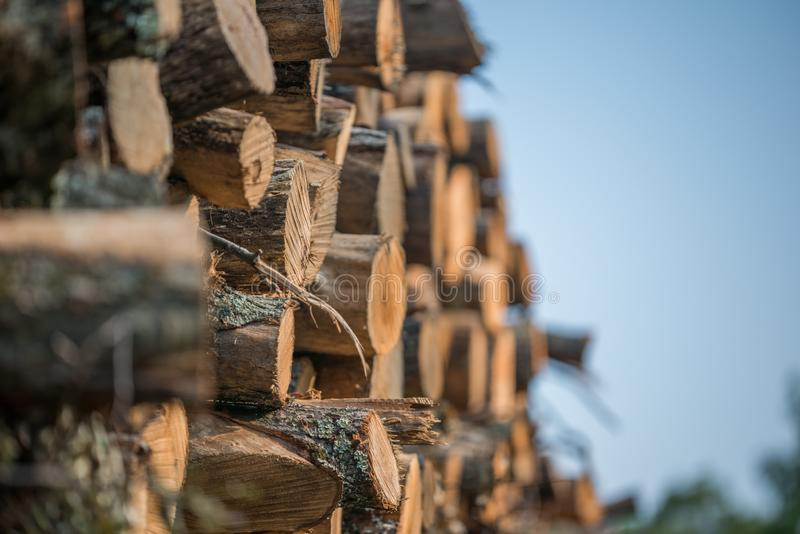 Piles of stacked logged trees from Governor Knowles State Forest in Northern Wisconsin - DNR has working forests that are harveste. D royalty free stock photo