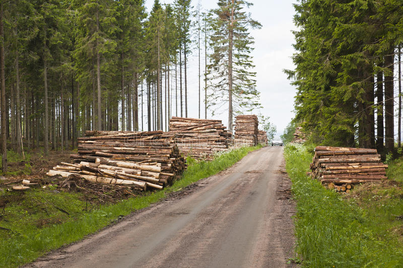 Download Piles of timber stock image. Image of forest, roadside - 23882129