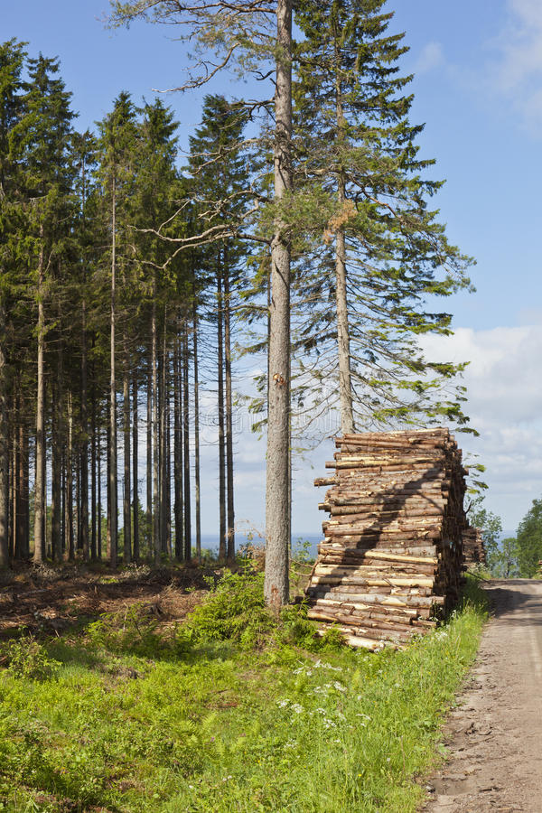 Download Piles of timber stock image. Image of roadside, taiga - 24326695