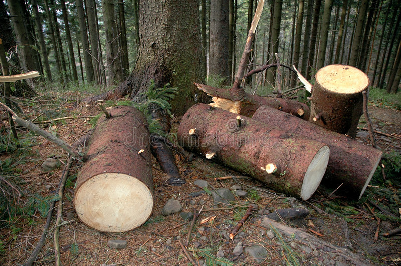 Piles of wood in forest