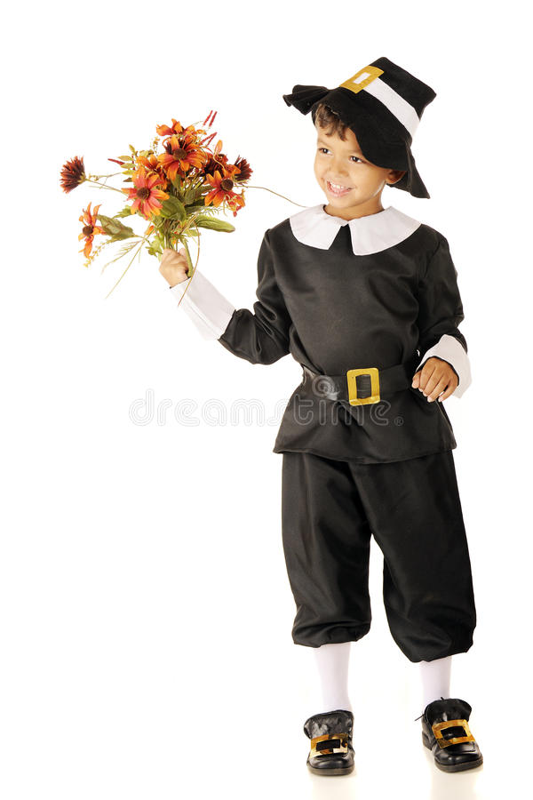 Pilgrim Flowers royalty free stock image