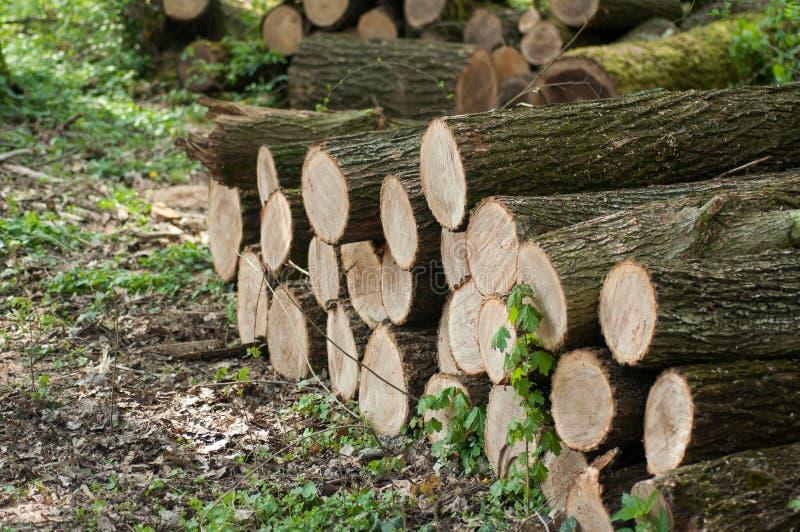 pilha da floresta de madeira cortada do início de uma sessão do coto imagens de stock royalty free