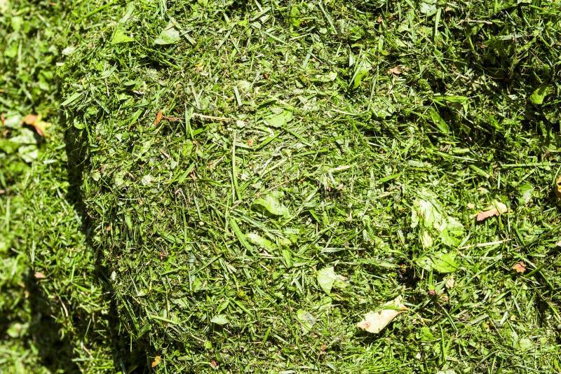 Pilha da grama cortada de cima de imagens de stock