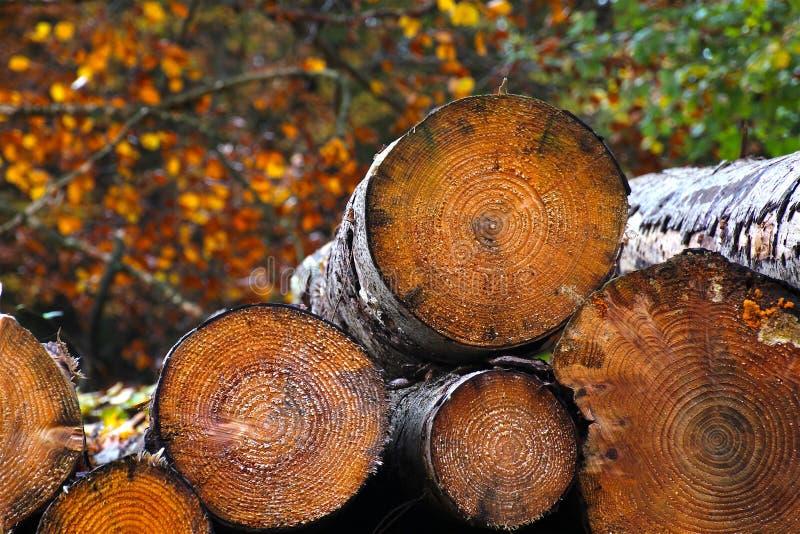 Download Pilha Da Lenha Em Cores Do Outono Imagem de Stock - Imagem de folhas, novembro: 80101315