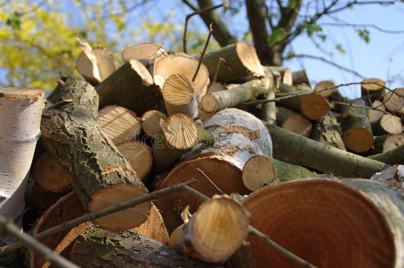 Pilha da madeira cutted fotografia de stock royalty free