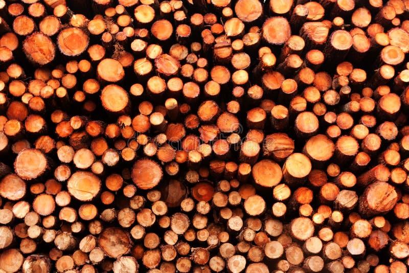 Pilha da madeira de pinho imagem de stock