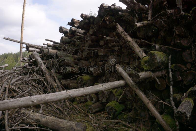 Pilha da madeira do log na floresta imagens de stock