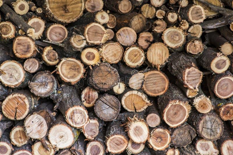A pilha da madeira registra o armazenamento para a indústria Uma pilha dos troncos de árvore cortados que dão uma ideia agradável fotos de stock royalty free