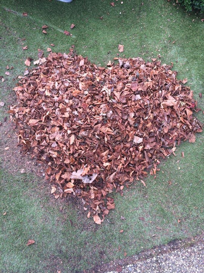 Pilha dada forma coração das folhas foto de stock