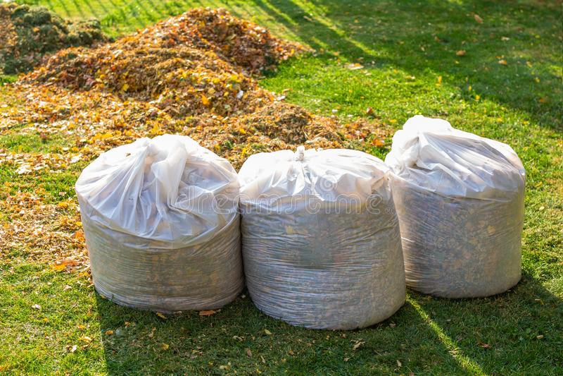 Pilha das folhas caídas amarelas e alaranjadas recolhidas em uns sacos de plástico brancos grandes no gramado da grama verde no q foto de stock