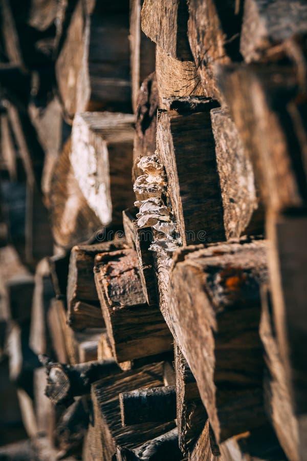 Pilha das partes de madeira com cogumelos foto de stock royalty free